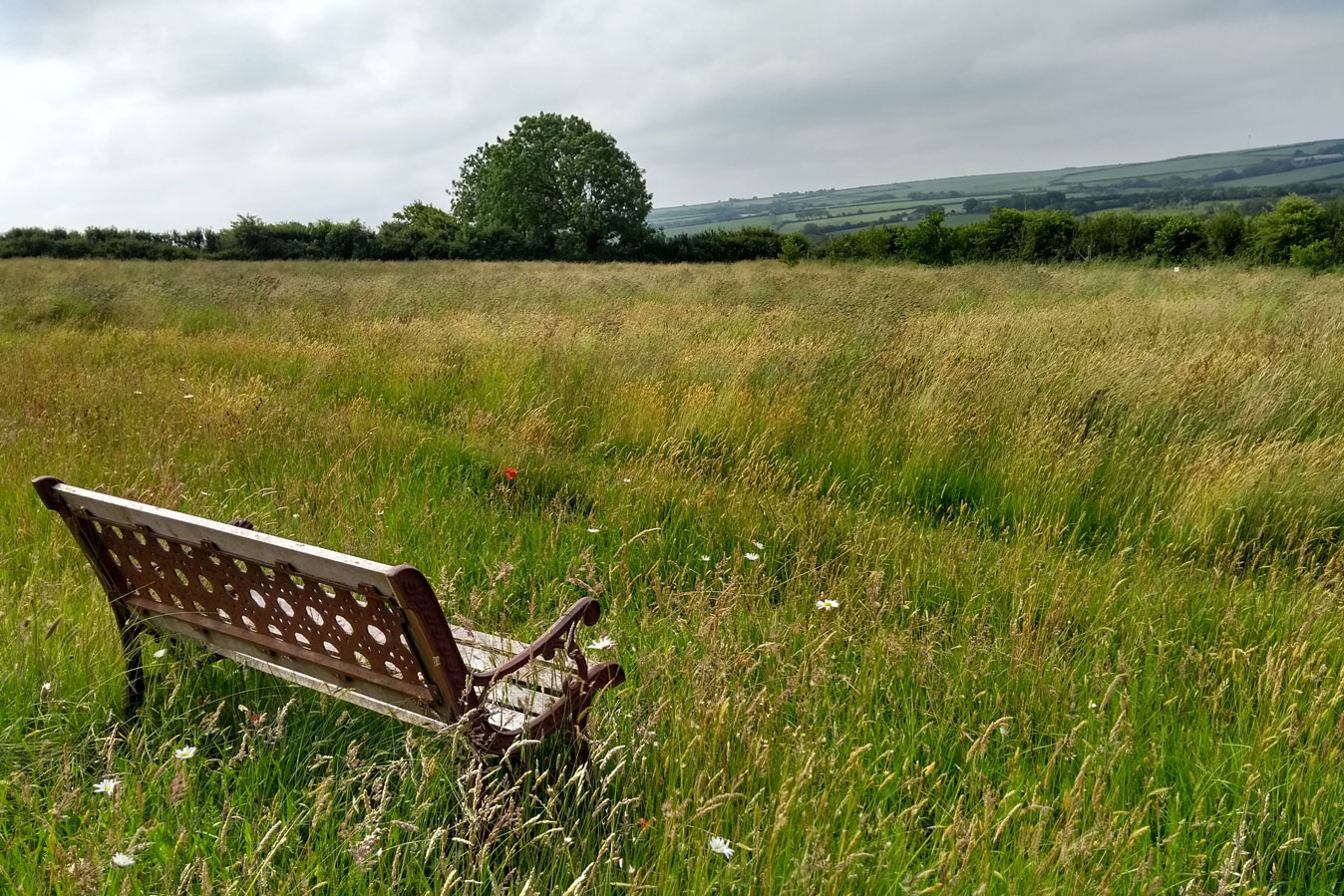Bench with view of Devon wild meadow